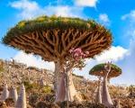 Dragon Blood Tree by Kelly Beckta