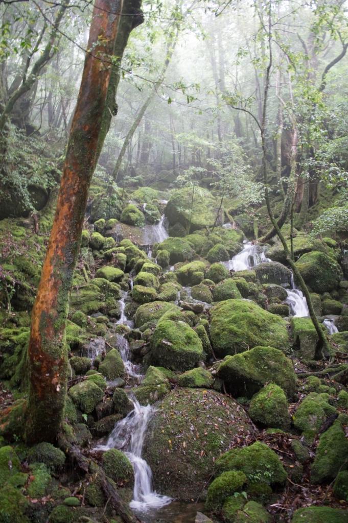 Moss Forest of Yakushima Island, Japan