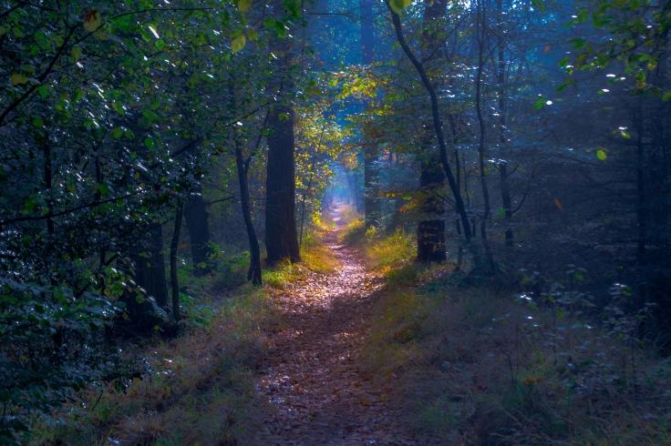 Fairytale Path by Pieter Kok