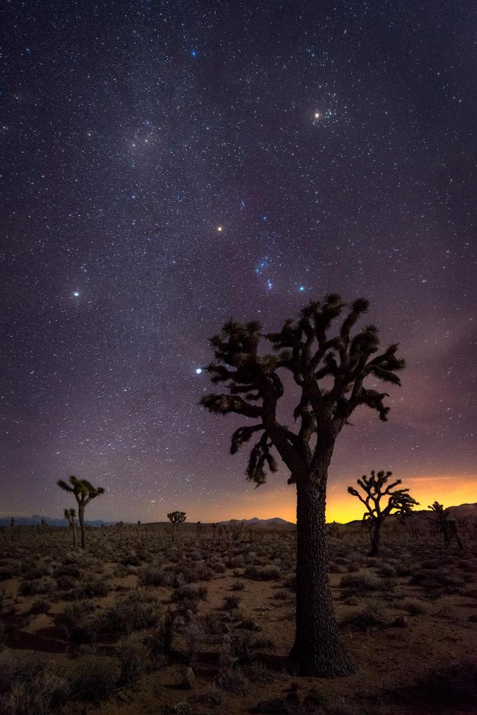 'Joshua Trees' by Cody Wilson