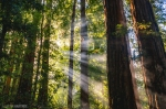 "'Morning Rays"" by Justin Hartney"