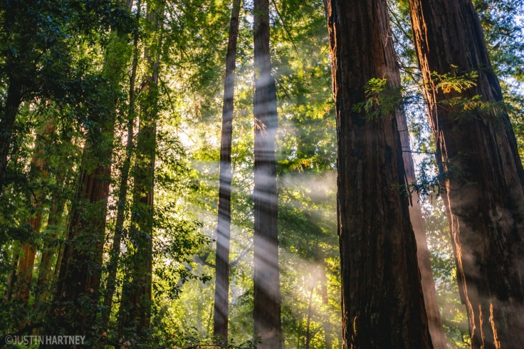 "'Morning Rays"" by Justin Hartney"