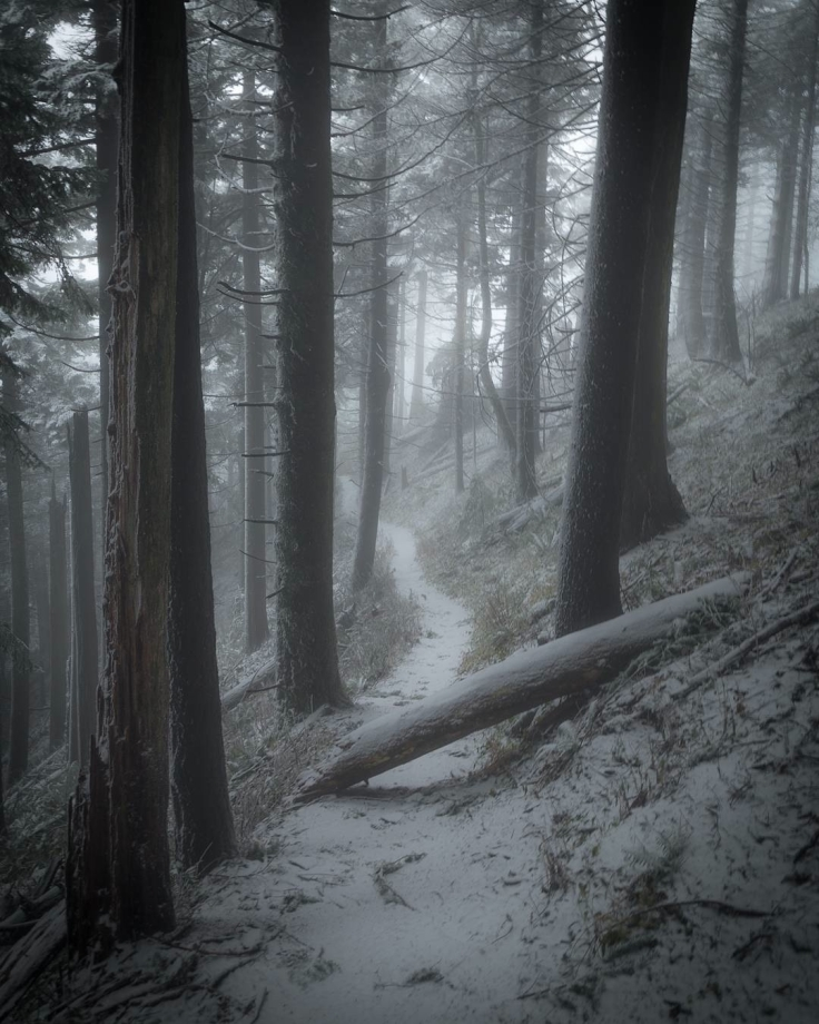 Dog Mountain Trail by Roby Babcock