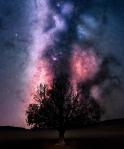 Alvord Desert by Derek Culver