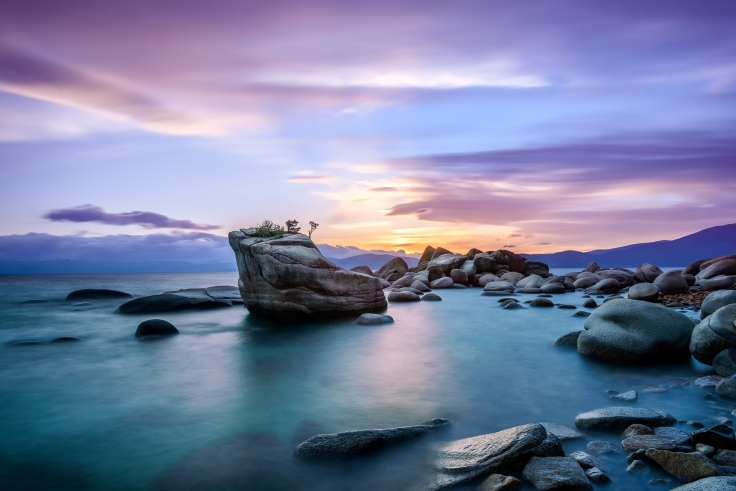 The Bonsai Tree of Lake Tahoe, by Kevin Boutwell